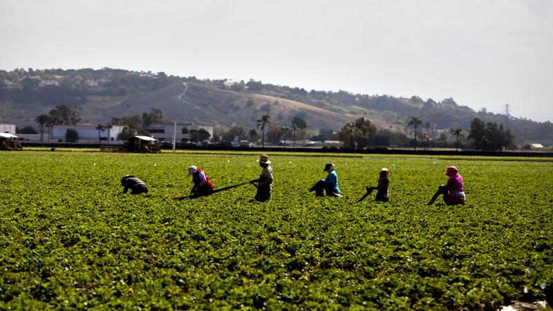 California's pesticide chiefs: Where are they now?