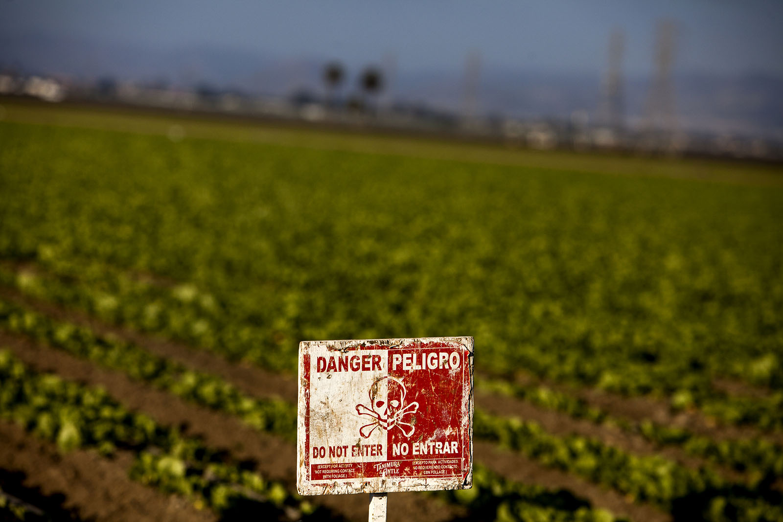 strawberries danger sign